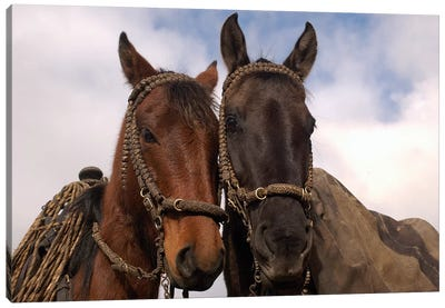 Domestic Horse Pair Belonging To Chagra Cowboys At The Hacienda Yanahurco In The Andes Mountains, Ecuador Canvas Art Print