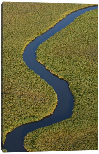 Papyrus Swamps And Channel, Aerial View, Africa Canvas Art Print