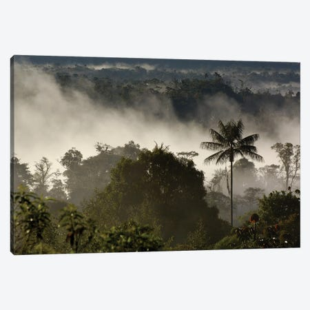 Cloud Forest Vegetation In Mist, Western Slope Of The Andes Mountains, San Isidro Cloud Forest, Ecuador Canvas Print #POX7} by Pete Oxford Canvas Print
