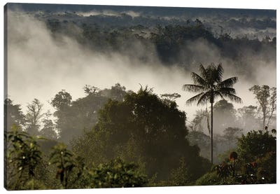 Cloud Forest Vegetation In Mist, Western Slope Of The Andes Mountains, San Isidro Cloud Forest, Ecuador Canvas Art Print