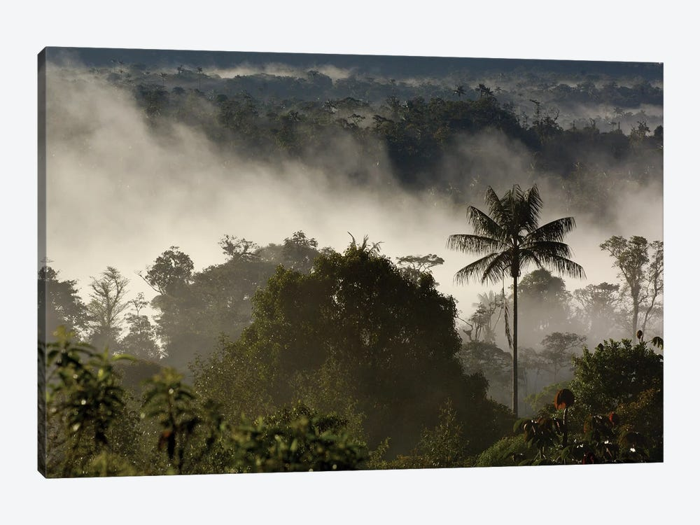 Cloud Forest Vegetation In Mist, Western Slope Of The Andes Mountains, San Isidro Cloud Forest, Ecuador by Pete Oxford 1-piece Canvas Artwork