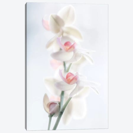 Pale Beauty Canvas Print #PPF3} by Peter Pfeiffer Canvas Artwork