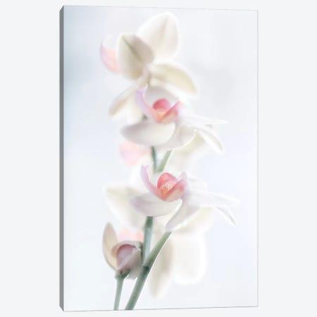 Pale Beauty Canvas Print #PPF3} by Peter Pfeiffer Canvas Artwork