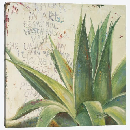 Aloe I Canvas Print #PPI13} by Patricia Pinto Canvas Artwork