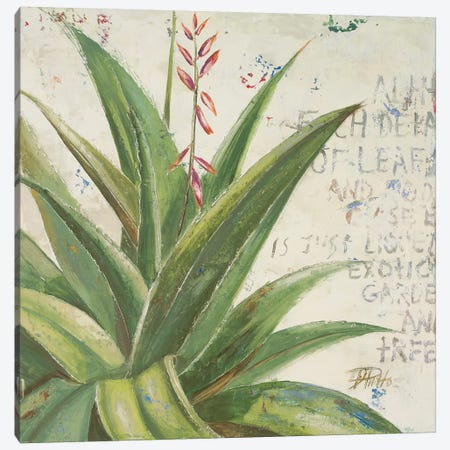 Aloe II Canvas Print #PPI14} by Patricia Pinto Art Print