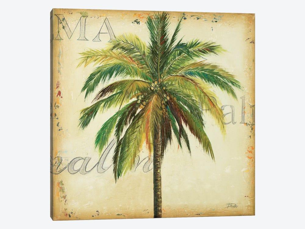 La Palma I by Patricia Pinto 1-piece Art Print