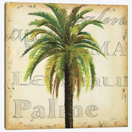 La Palma III Canvas Print #PPI177} by Patricia Pinto Canvas Print