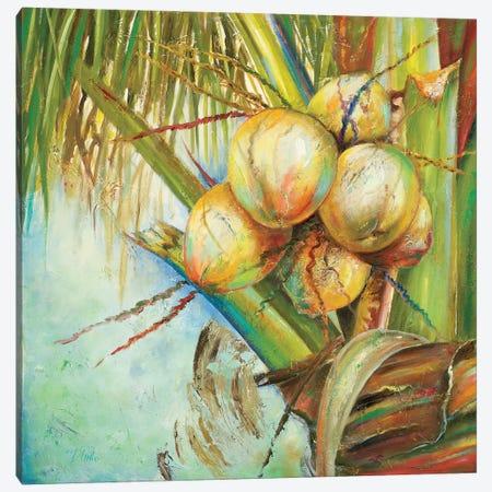 Patricia's Coconuts II Canvas Print #PPI227} by Patricia Pinto Canvas Print