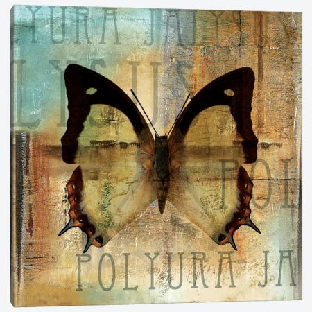 Polyurabutterfly I Canvas Print #PPI237} by Patricia Pinto Canvas Art