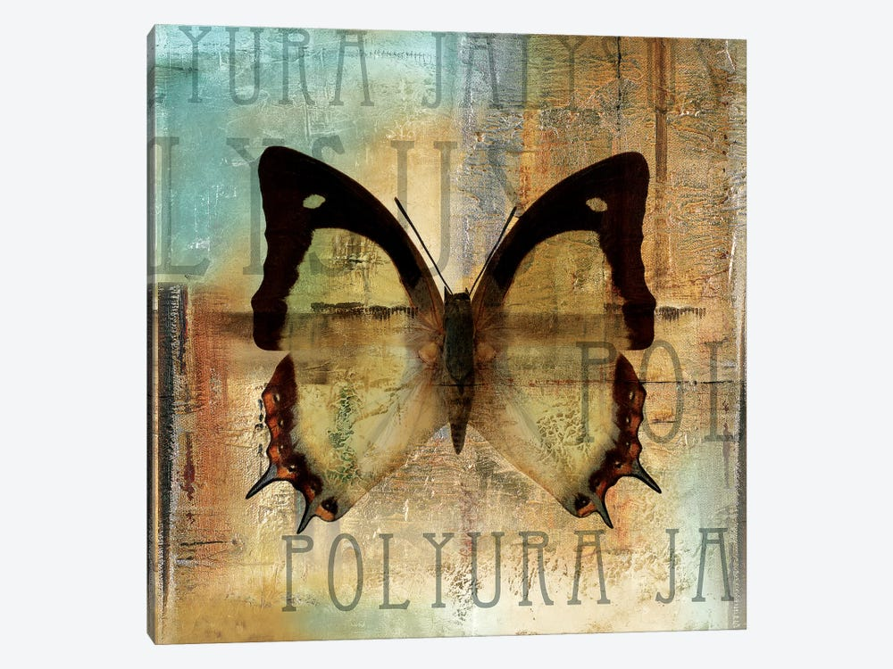 Polyurabutterfly I by Patricia Pinto 1-piece Canvas Wall Art