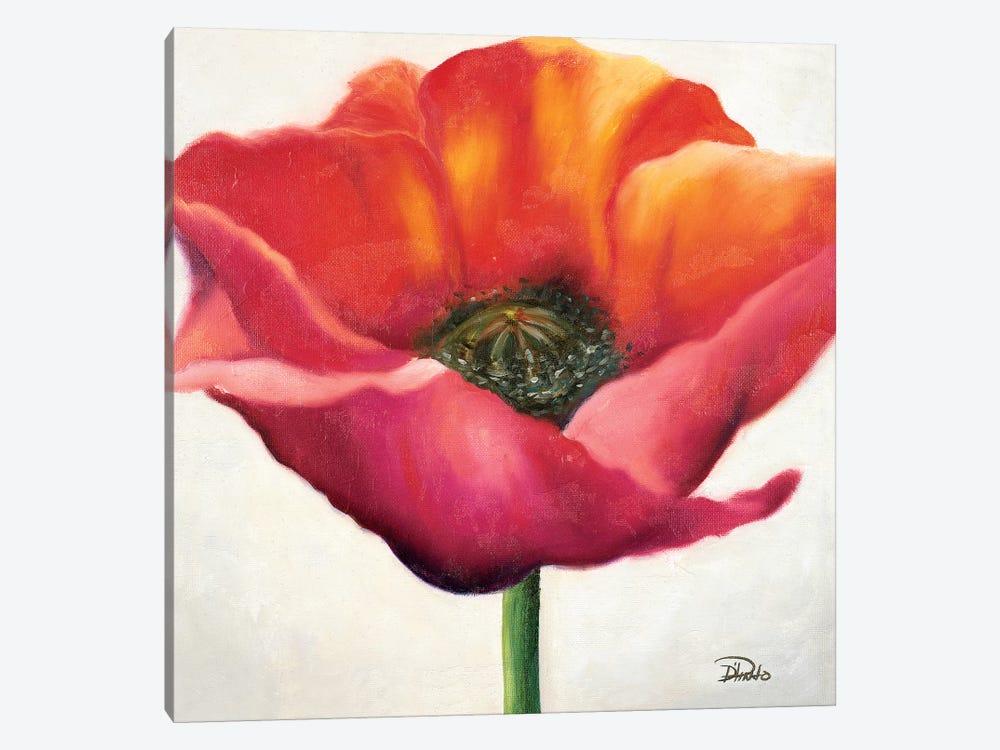 Poppy Flower I by Patricia Pinto 1-piece Canvas Artwork