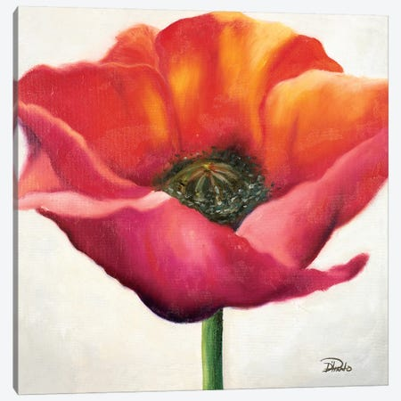Poppy Flower I Canvas Print #PPI239} by Patricia Pinto Art Print