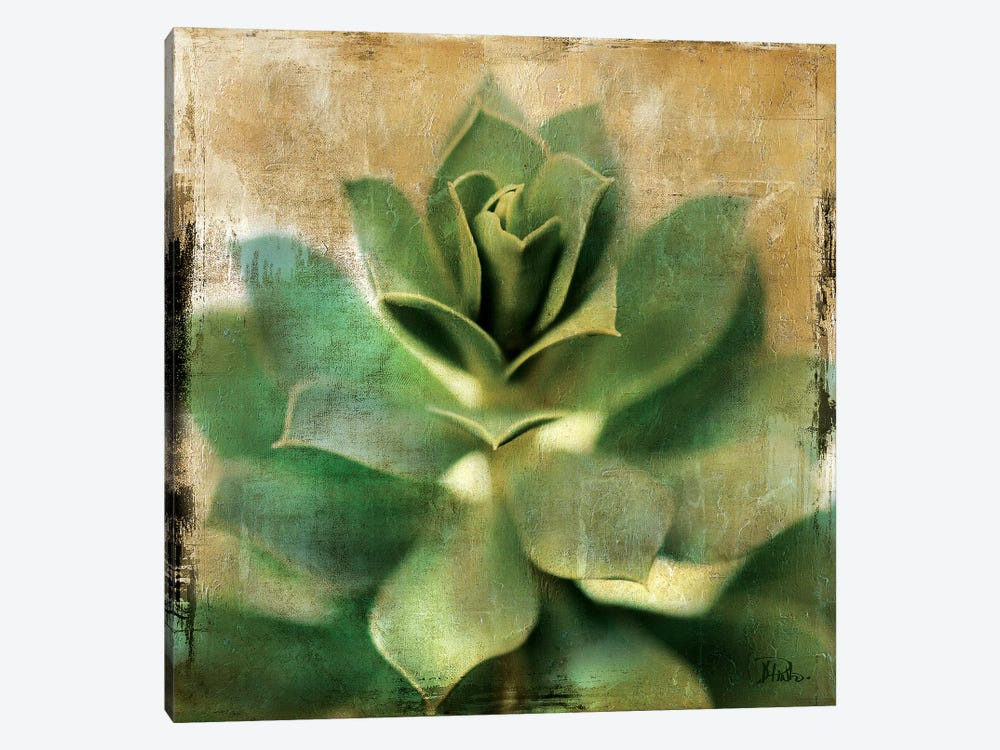 Succulent I by Patricia Pinto 1-piece Canvas Print
