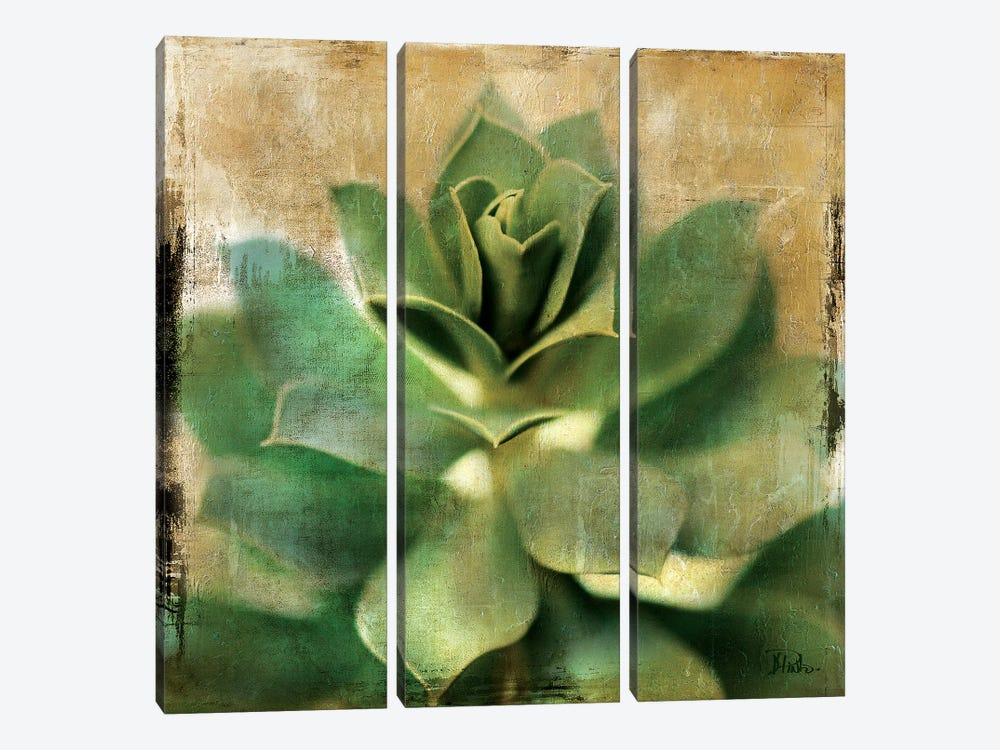 Succulent I by Patricia Pinto 3-piece Art Print