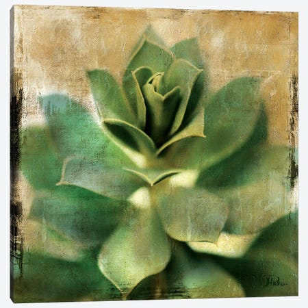 Succulent I Canvas Print #PPI281} by Patricia Pinto Canvas Artwork