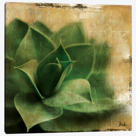 Succulent II Canvas Print #PPI282} by Patricia Pinto Canvas Wall Art