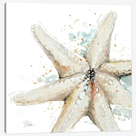 Water Starfish Canvas Print #PPI332} by Patricia Pinto Canvas Artwork