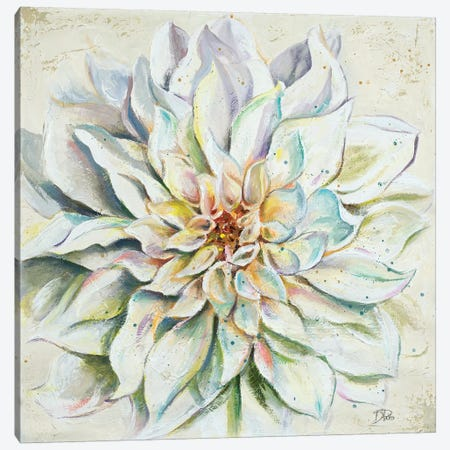 White Dahlias II Canvas Print #PPI352} by Patricia Pinto Canvas Artwork