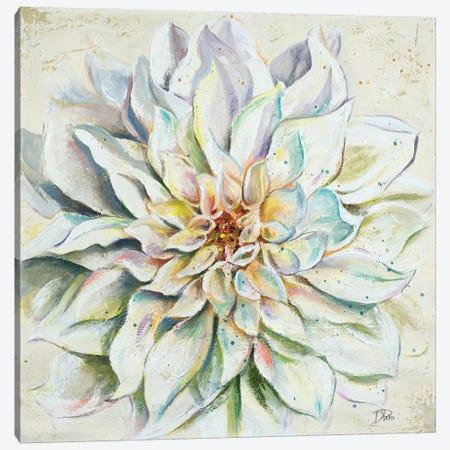 White Dahlias II Canvas Print #PPI352} by Patricia Pinto Canvas Artwork
