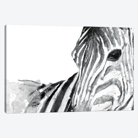 Zebra Gaze Canvas Print #PPI358} by Patricia Pinto Canvas Art