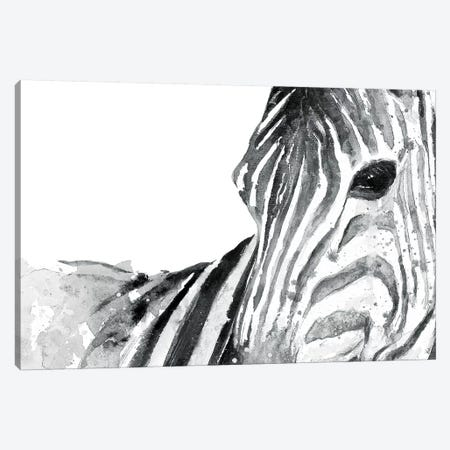 Zebra Gaze Canvas Print #PPI358} by Patricia Pinto Canvas Art