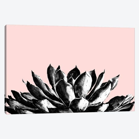 Agave On Blush Canvas Print #PPI372} by Patricia Pinto Canvas Artwork