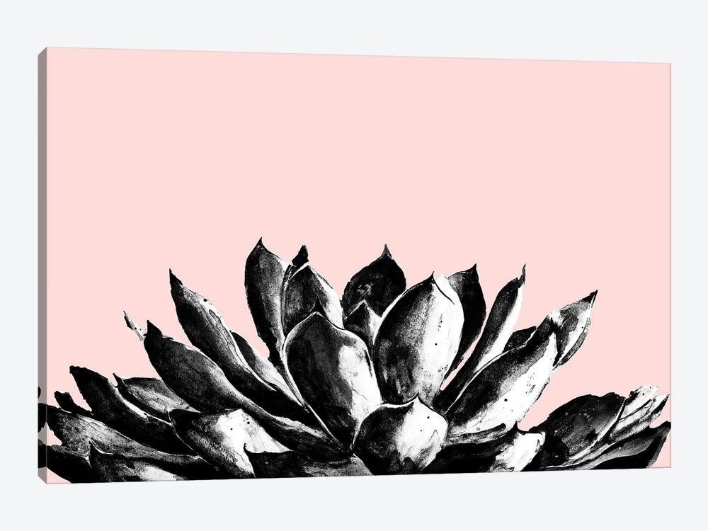 Agave On Blush by Patricia Pinto 1-piece Canvas Art