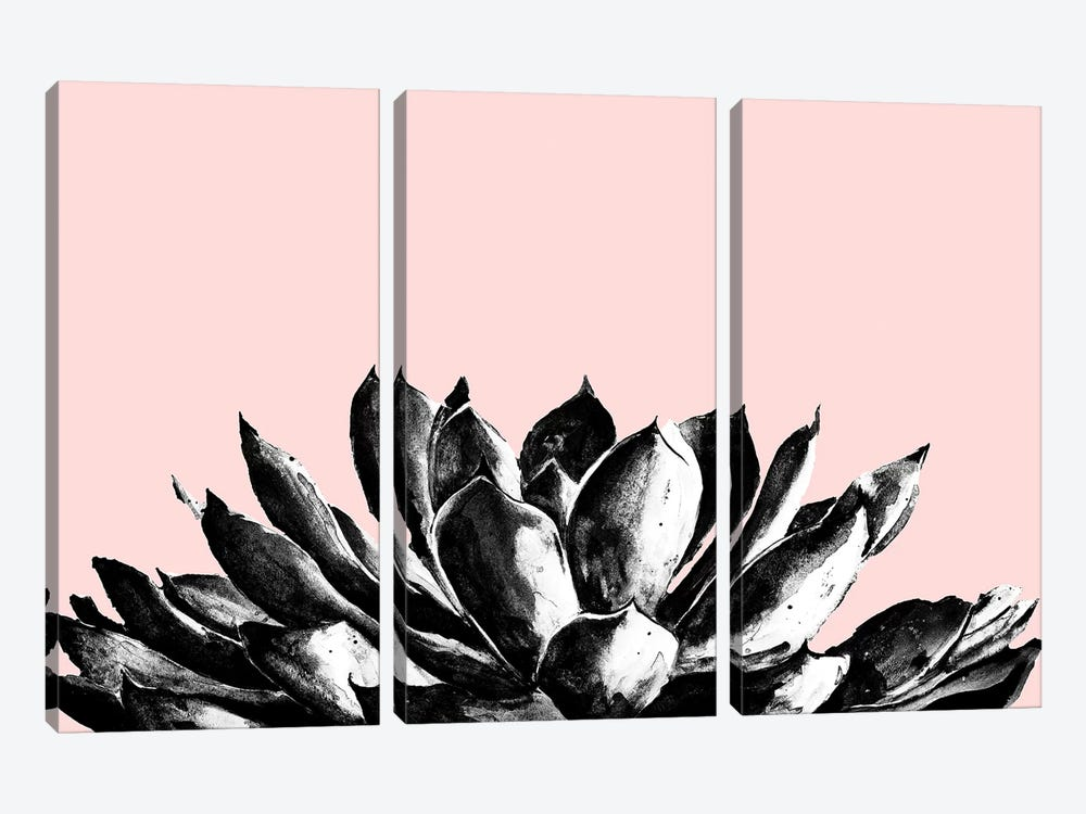 Agave On Blush by Patricia Pinto 3-piece Canvas Artwork