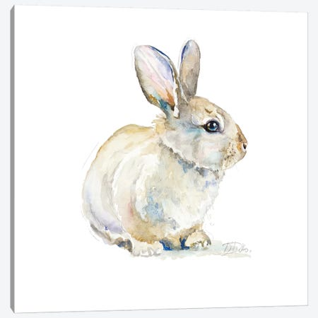 Baby Rabbit Canvas Print #PPI378} by Patricia Pinto Canvas Art
