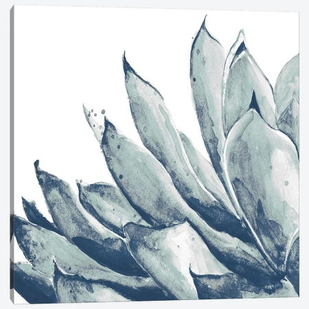 Blue Agave On White I Canvas Print #PPI394} by Patricia Pinto Canvas Art Print