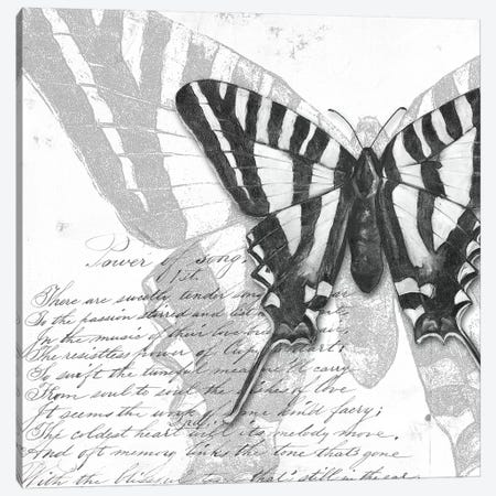 Butterflies Studies II Canvas Print #PPI407} by Patricia Pinto Canvas Art Print