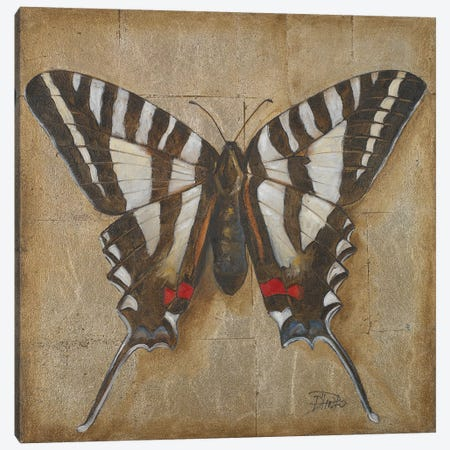 Butterfly I Canvas Print #PPI408} by Patricia Pinto Canvas Wall Art