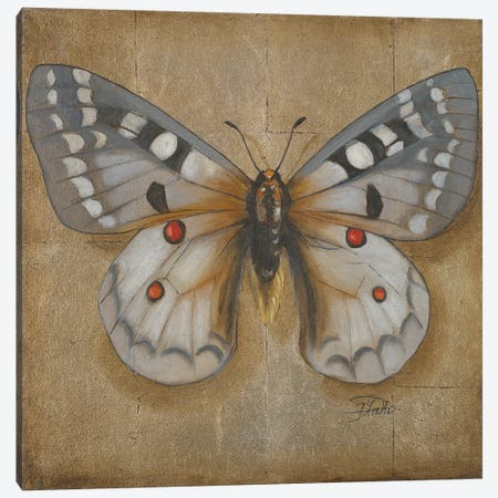 Butterfly II Canvas Print #PPI409} by Patricia Pinto Canvas Wall Art