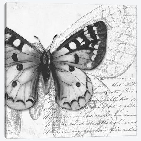 Butterfly Studies I Canvas Print #PPI410} by Patricia Pinto Canvas Art Print