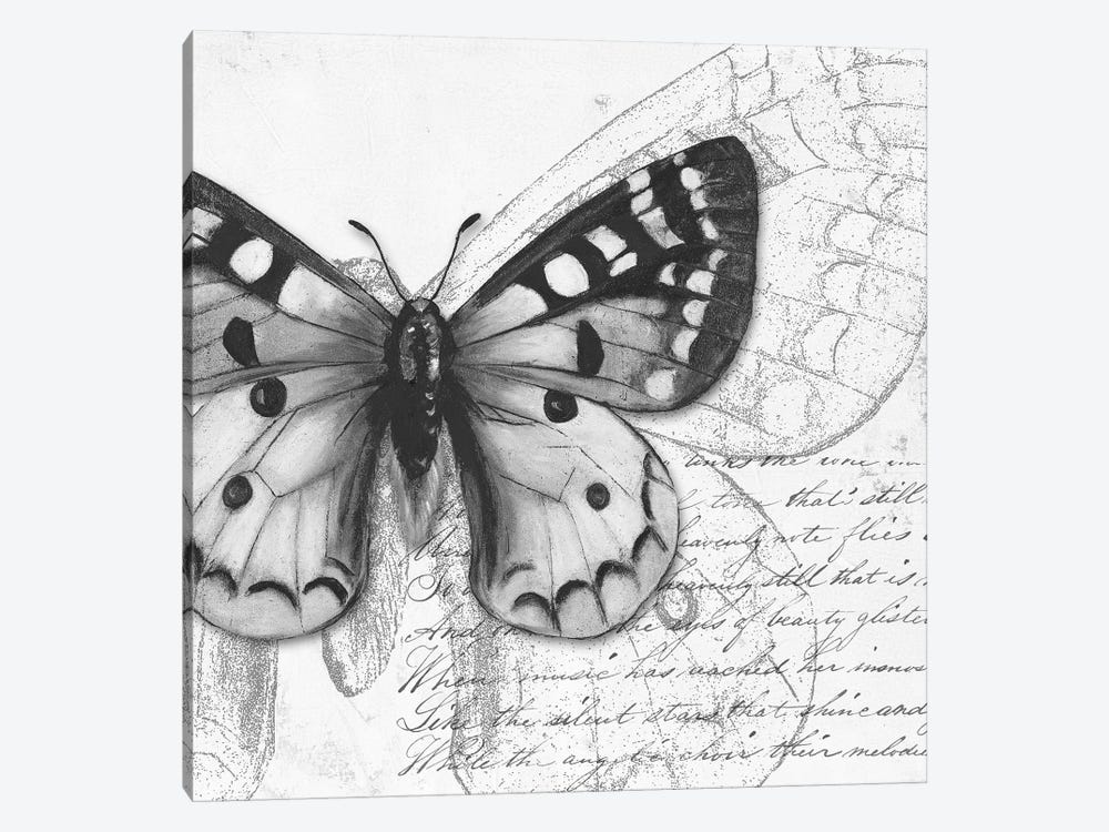 Butterfly Studies I by Patricia Pinto 1-piece Canvas Print