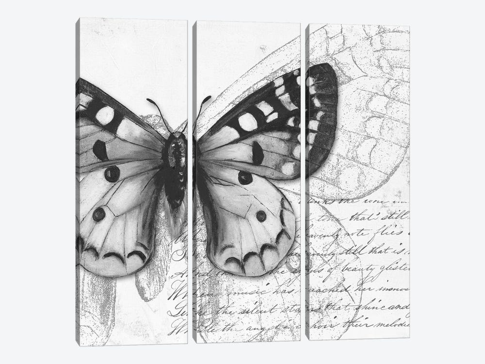 Butterfly Studies I by Patricia Pinto 3-piece Canvas Art Print