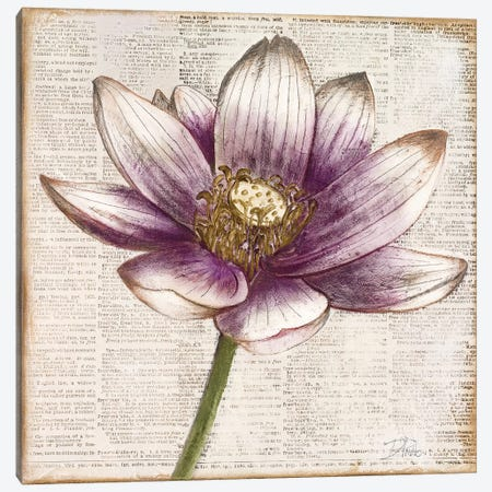 Defined Lotus II Canvas Print #PPI425} by Patricia Pinto Art Print