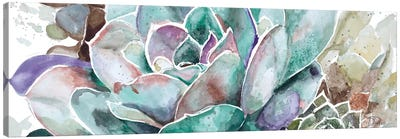 Desert Flower Canvas Art Print