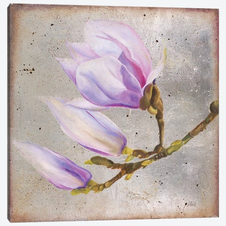 Magnolia On Silver Leaf I Canvas Print #PPI488} by Patricia Pinto Canvas Wall Art
