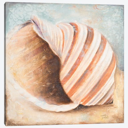 Seashell Collection I Canvas Print #PPI541} by Patricia Pinto Art Print