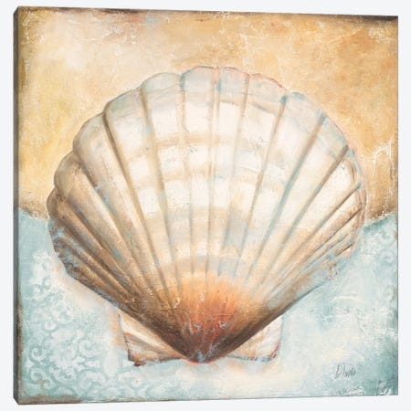 Seashell Collection III Canvas Print #PPI543} by Patricia Pinto Canvas Print