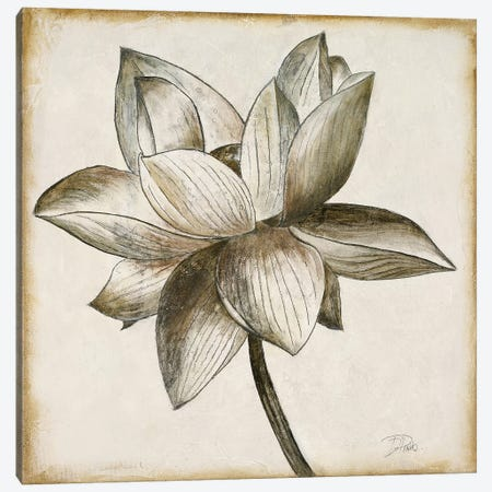 Sepia Lotus I Canvas Print #PPI547} by Patricia Pinto Canvas Art