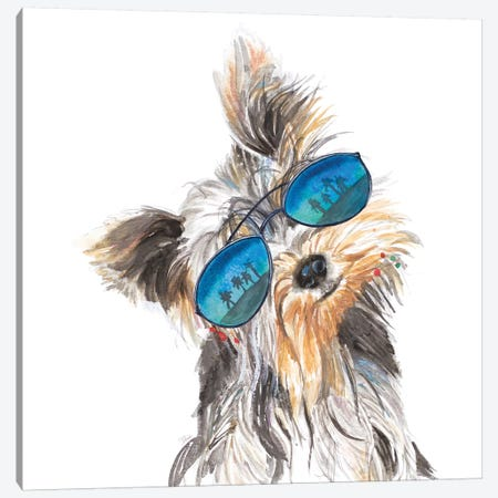Yorkie With Shades Canvas Print #PPI594} by Patricia Pinto Art Print
