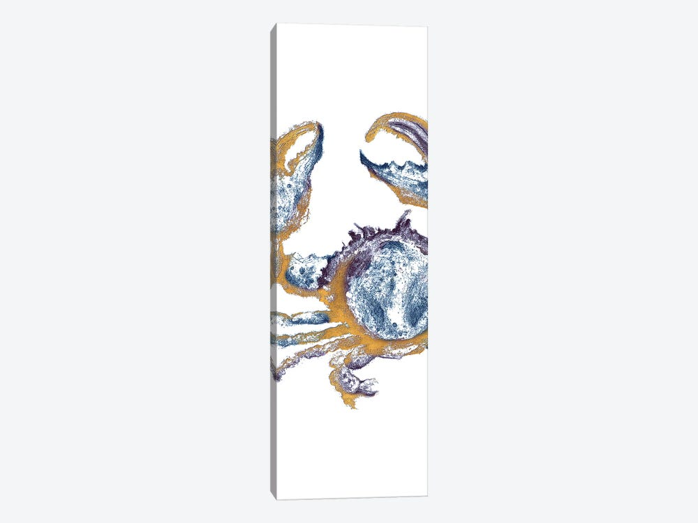 Surf Side Golden Blue Crab by Patricia Pinto 1-piece Canvas Print