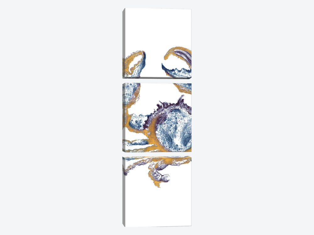 Surf Side Golden Blue Crab by Patricia Pinto 3-piece Art Print