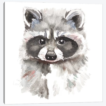 Baby Raccoon Canvas Print #PPI631} by Patricia Pinto Canvas Print