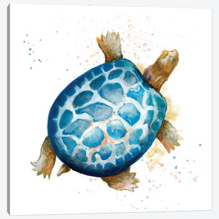 Tortuga Azul Square Canvas Print #PPI677} by Patricia Pinto Canvas Artwork
