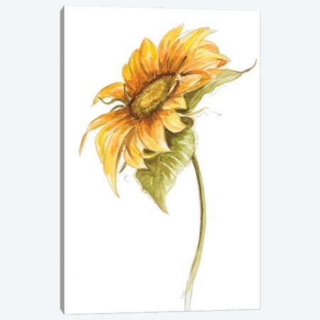 Harvest Gold Sunflower I Canvas Print #PPI702} by Patricia Pinto Canvas Art Print