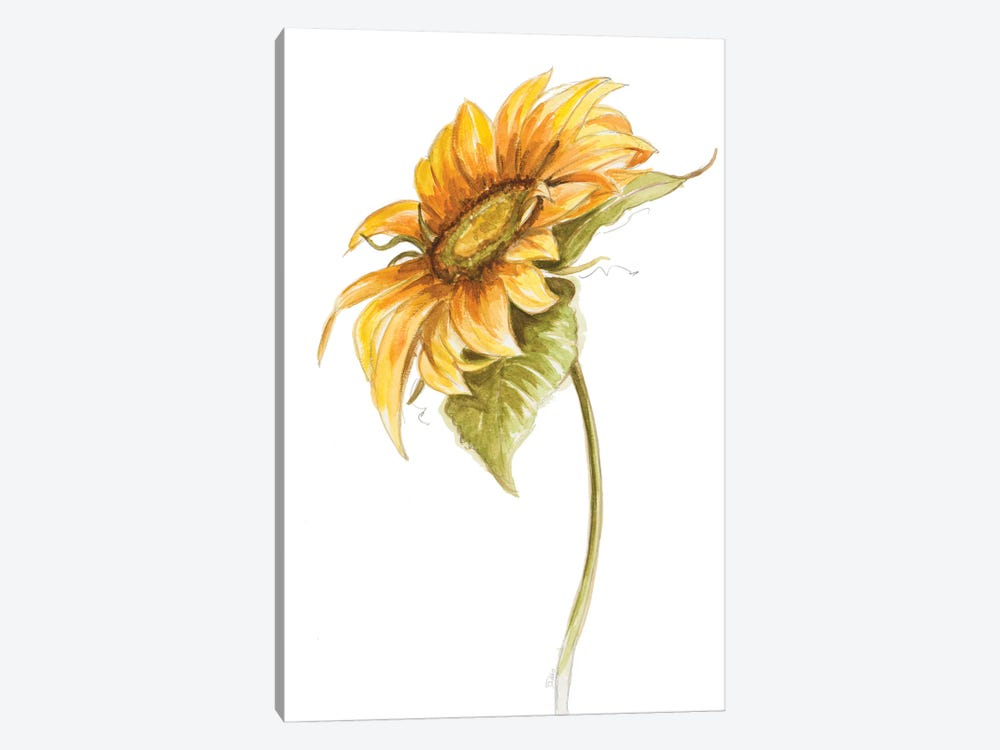 Harvest Gold Sunflower I by Patricia Pinto 1-piece Canvas Art