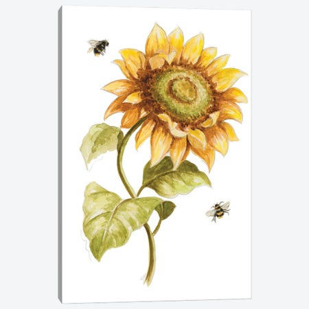 Harvest Gold Sunflower II Canvas Print #PPI703} by Patricia Pinto Canvas Art Print